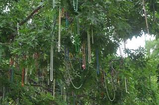 The Bead Tree in Tulane