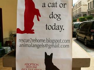 Animal Angels Plakat