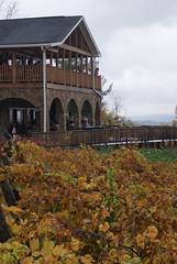 Bluemont Vineyard Vines 8