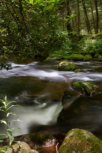 park longexposure friends mountains green water rock nc moss great northcarolina national rhododendron smoky lush silky coolwater cataloocheevalley haywoodcounty palmercreek davidhopkinsphotography