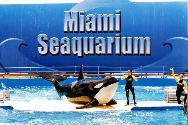 florida miami seaquarium 1995 flickr photo