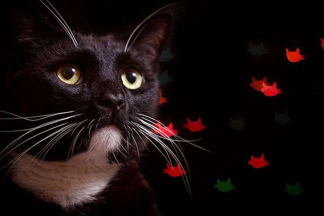 Cat Bokeh