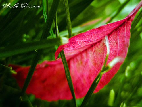 Red Leaf | Colors of the holidays