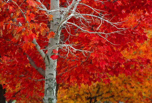 New Jersey Fall splendor by Photokit Durango