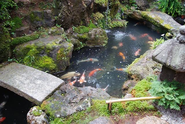 A pond of koi in a japanese zen garden flickr photo for Zen garden pond