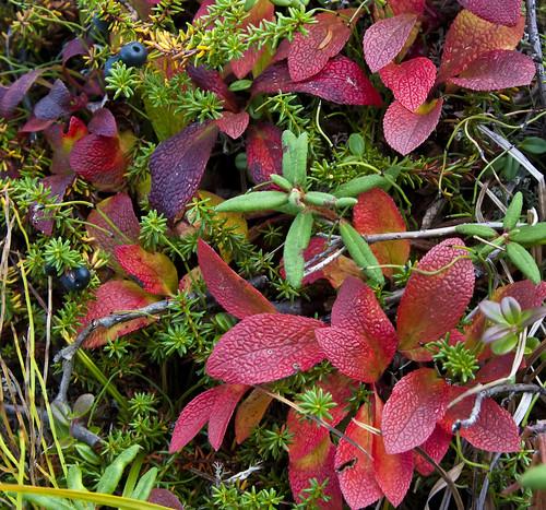 Plants Nabesna mine