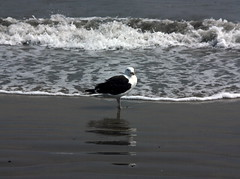 Revere Beach & Sea Gull