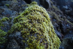 coral reef, algae, seaweed, nature, macro photography, flora, green, reef, rock, moss,
