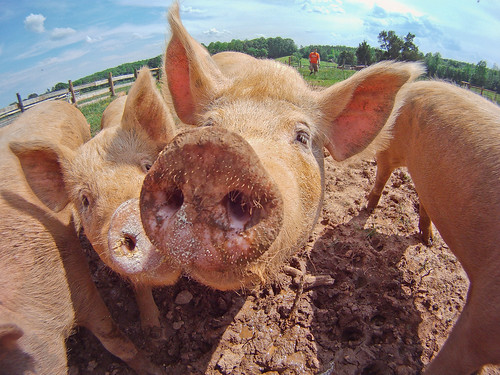 Over the last 50 years, research and technological advances have led to a 35% decrease in the pork industry's carbon footprint.