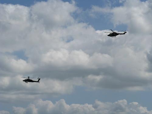 Lynx and Apache