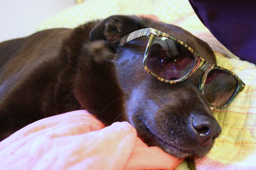 dog sunglasses