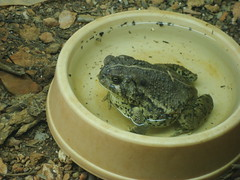 Toad in the museum