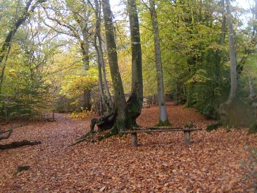 Autumn trees 6