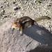 Small photo of Alvin