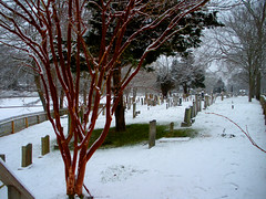 12-09 East Hampton Red Tree