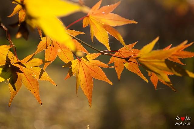 1125_kyoto_1436