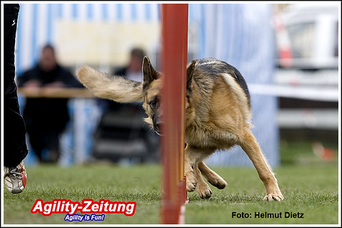sv agility bundesliga essen schonnebeck agility is fun agility bild zeitung. Black Bedroom Furniture Sets. Home Design Ideas