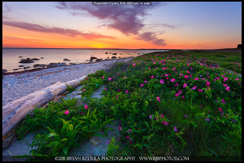 flowers sunset seascape massachusetts newengland driftwood westport sigma1020 gooseberryisland canon40d