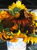 Athens Locally Grown Sunflower Bouquet