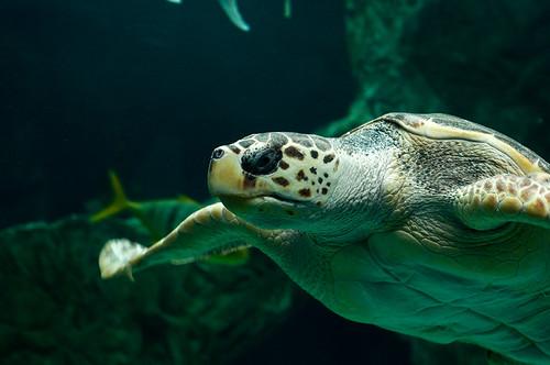 Tortuga acuario animalitos for Acuario tortugas
