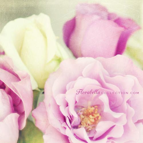 "Фотография: ""Bouquet II"" Автор: Shana Rae..."