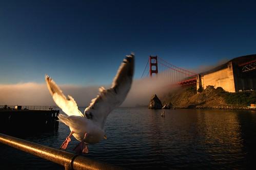bridge sunrise bay geoff quinn geoffrey seagul saariysqualitypictures