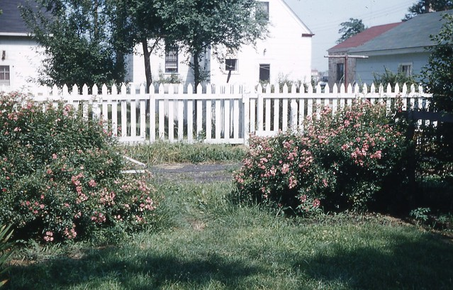 Backyard Of Our Home In Lansing Il Early 1950 39 S Flickr Photo Sharing