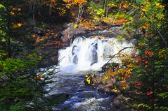v. Falls and Colours