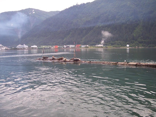 Cruise Ship Pollution   Flickr - Photo Sharing!