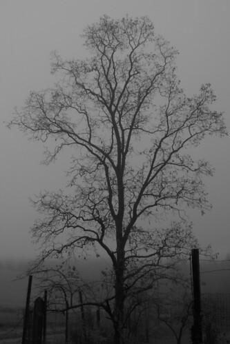 autumn newyork fog mountsaviour