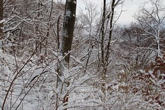 woodland, branch, winter, tree, snow, ice, frost, forest, winter storm, blizzard, freezing,