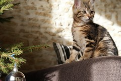 Bagheera the baby cat - Photo of Cintheaux