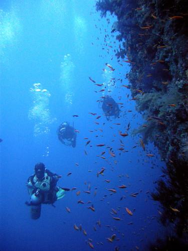 Divers on Thomas Reef Wall