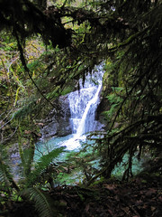 Wolf Creek Falls Trail