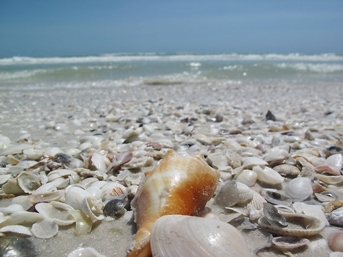 She sells sea shells by the sea shore.
