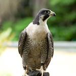 Woodland Park Zoo Seattle 096