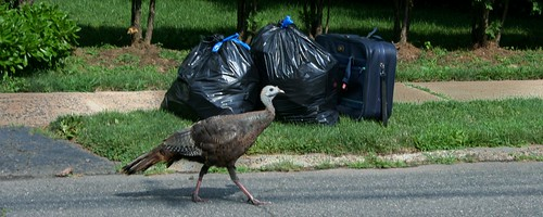 Grass & Pavement, Trash & Turkey