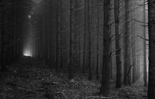 road trees blackandwhite bw oregon forest canon eos 452 1022mm gravel 1022 mcminnville 40d dragondaggeraward yourwonderland