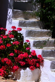 Stairs and geranium