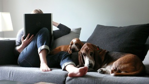 Basset Hounds on sofa