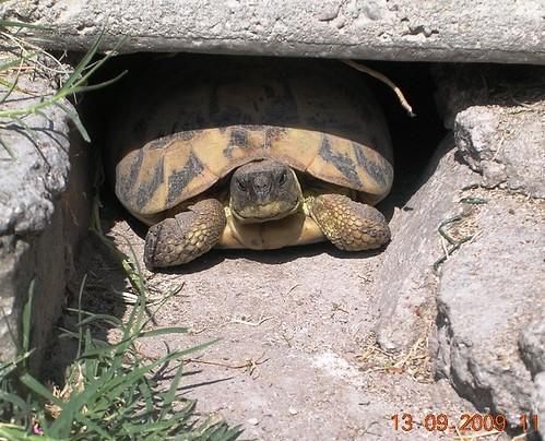 Informazioni tartarughe di terra yahoo answers for Tartarughe di terra letargo