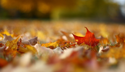 Fall Foliage on the Ground