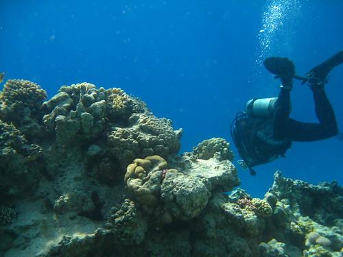 Taucher über dem Riff