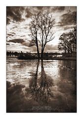 Lonely Tree @ the Kralingse Plas