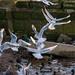 Edg_Res_Birds-15.jpg