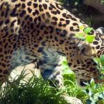 Woodland Park Zoo Seattle 013