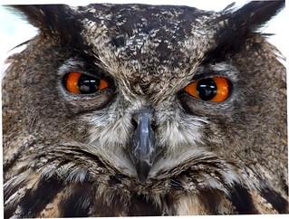 Owl by jennicatpink