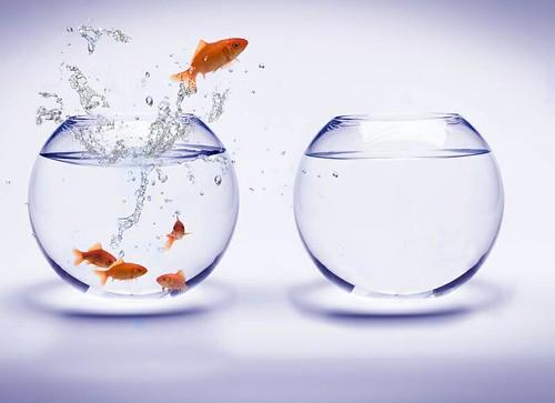 fishbowl jump