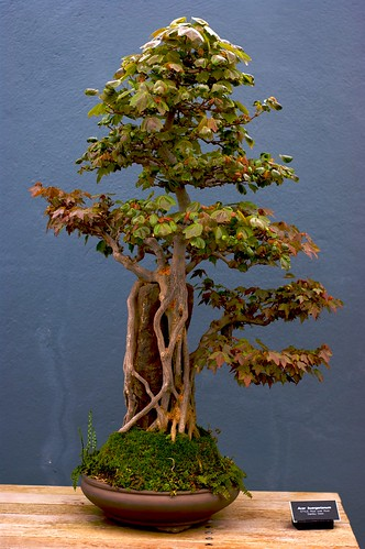 Cool wallpapers bonsai tree new york botanica for Cool bonsai tree