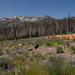 Angora Fire Survey Site G